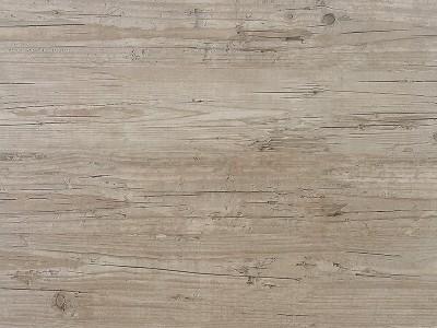 Washington Pine